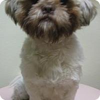 Adopt A Pet :: Spunky - Gary, IN
