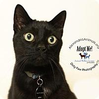 Adopt A Pet :: Dylan - Alexandria, VA