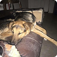 Adopt A Pet :: Lukas - Las Vegas, NV