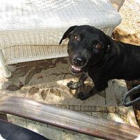 Adopt A Pet :: Presley - Perris, CA
