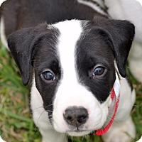 Adopt A Pet :: Bootstrap - Albemarle, NC