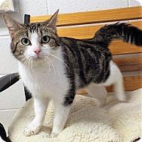 Adopt A Pet :: Scarlett - Shelby, MI