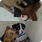 Adopt A Pet :: Magic 7 pup 1