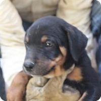 Adopt A Pet :: Sneezy - Tucson, AZ