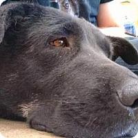 Adopt A Pet :: Laney - Tucson, AZ