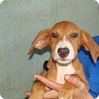 Adopt A Pet :: Tova - Oviedo, FL