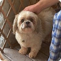 Adopt A Pet :: Becker - Baltimore, MD