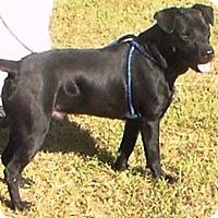Adopt A Pet :: Trace - Lebanon, ME