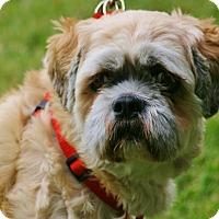 Adopt A Pet :: Elmo - Carlsbad, CA