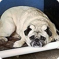 Adopt A Pet :: Mugsy - Eldora, IA
