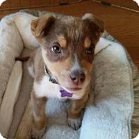 Adopt A Pet :: Red - Littleton, CO
