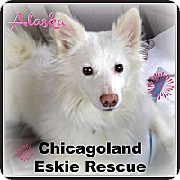 Adopt A Pet :: Alaska - Elmhurst, IL
