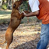 Adopt A Pet :: Penny - Flower Mound, TX
