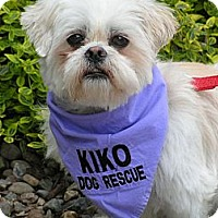 Adopt A Pet :: Sunny Jim - Rigaud, QC