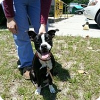 Adopt A Pet :: Princess - Crawfordville, FL