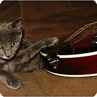 Adopt A Pet :: Sweet Pea - Oxford, NY