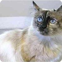 Adopt A Pet :: Pheobe - Markham, ON