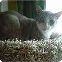 Adopt A Pet :: Jacob - Manalapan, NJ