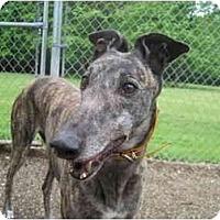 Adopt A Pet :: Susan (RJ's Susan B) - Chagrin Falls, OH