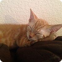 Adopt A Pet :: Abilene - Phoenix, AZ