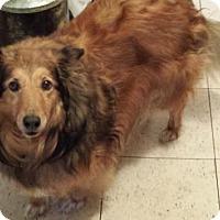 Adopt A Pet :: Abby - Saskatoon, SK