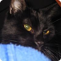 Adopt A Pet :: Isis - Dallas, TX