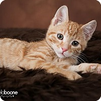Adopt A Pet :: Donner - Plymouth, MN