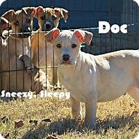 Adopt A Pet :: Doc - Austin, TX