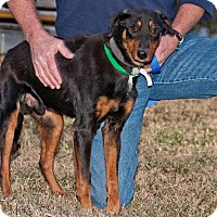 Adopt A Pet :: Pita - Cashiers, NC