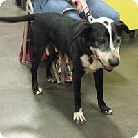Adopt A Pet :: Bogey - Alexis, NC