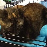 Adopt A Pet :: Patches 3 - Houston, TX