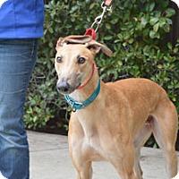 Adopt A Pet :: Slim - Walnut Creek, CA