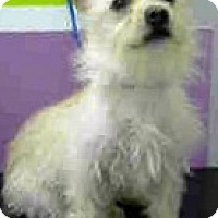 Adopt A Pet :: Benji-ADOPTION PENDING - Boulder, CO