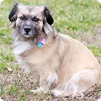 Adopt A Pet :: Maggie II - Waldorf, MD