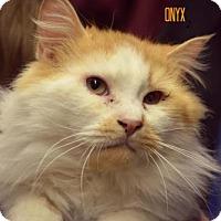 Adopt A Pet :: Onyx - Niagara Falls, NY
