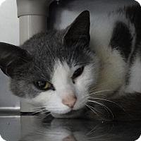 Adopt A Pet :: Piglet - Elyria, OH