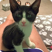 Adopt A Pet :: Tyrion - Huntsville, AL