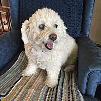 Adopt A Pet :: Emma - Fargo, ND