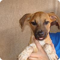 Adopt A Pet :: Yoda - Oviedo, FL