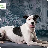 Adopt A Pet :: Ahsoka - Mayer, MN
