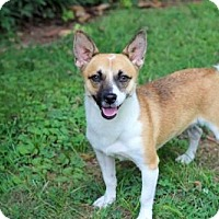 Adopt A Pet :: FOXY BROWN - HELP SAVE HER!! - Franklin, TN