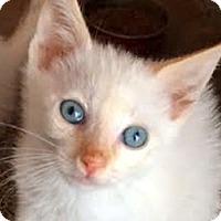 Adopt A Pet :: Emmit - LaJolla, CA