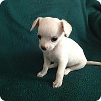 Adopt A Pet :: Tina - Shannon, GA
