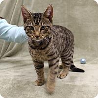 Adopt A Pet :: Tony - McCormick, SC