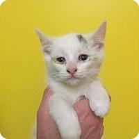Adopt A Pet :: Drogo - Adrian, MI