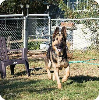 German Shepherd Dog Mix Dog for adoption in Walnut Creek, California - Hero