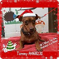 Adopt A Pet :: TAMMY - URGENT Moreno Valley - San Bernardino, CA