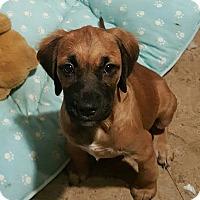 Adopt A Pet :: Mike - Savannah, GA
