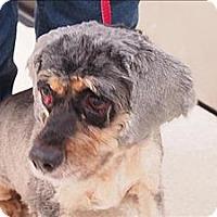Adopt A Pet :: Paris - Portland, OR
