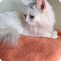Adopt A Pet :: Iris - North Las Vegas, NV